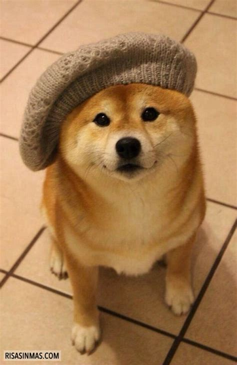 This is the doge of many hats in real life : dogecoin